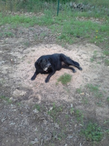 Buffy in the sand after her bath.
