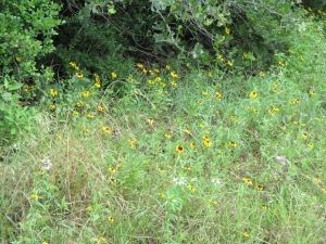 A patch of wildflowers